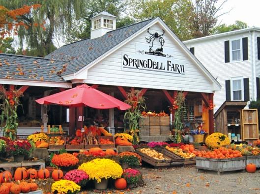 Quầy tiêu thụ của nông trại Springdell lúc mùa thu. Ảnh: Mai Ngọc Châu